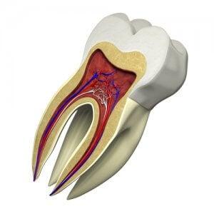 Der Aufbau des Zahnes