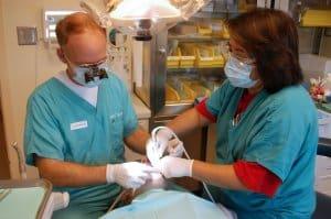 Zahnarztbehandlungen