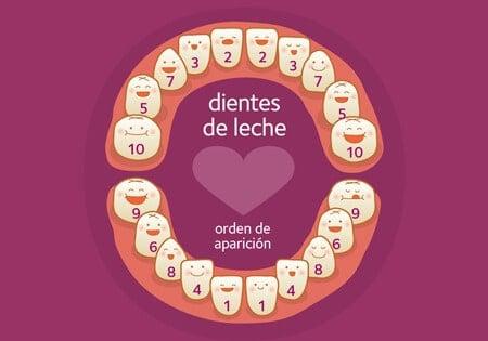 orden de salida de los dientes de leche