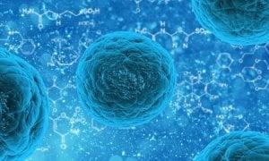 Celulas T