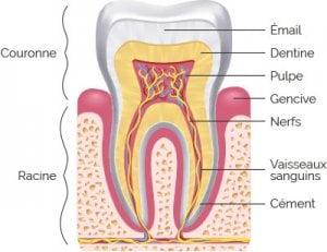 émail, dentine, pulpe, les zones de prédilection de la névralgie dentaire